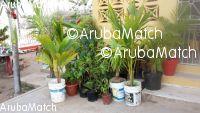 Aruba sierplanten en fruitplanten